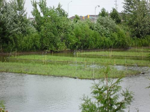 河流生态浮岛 示意图